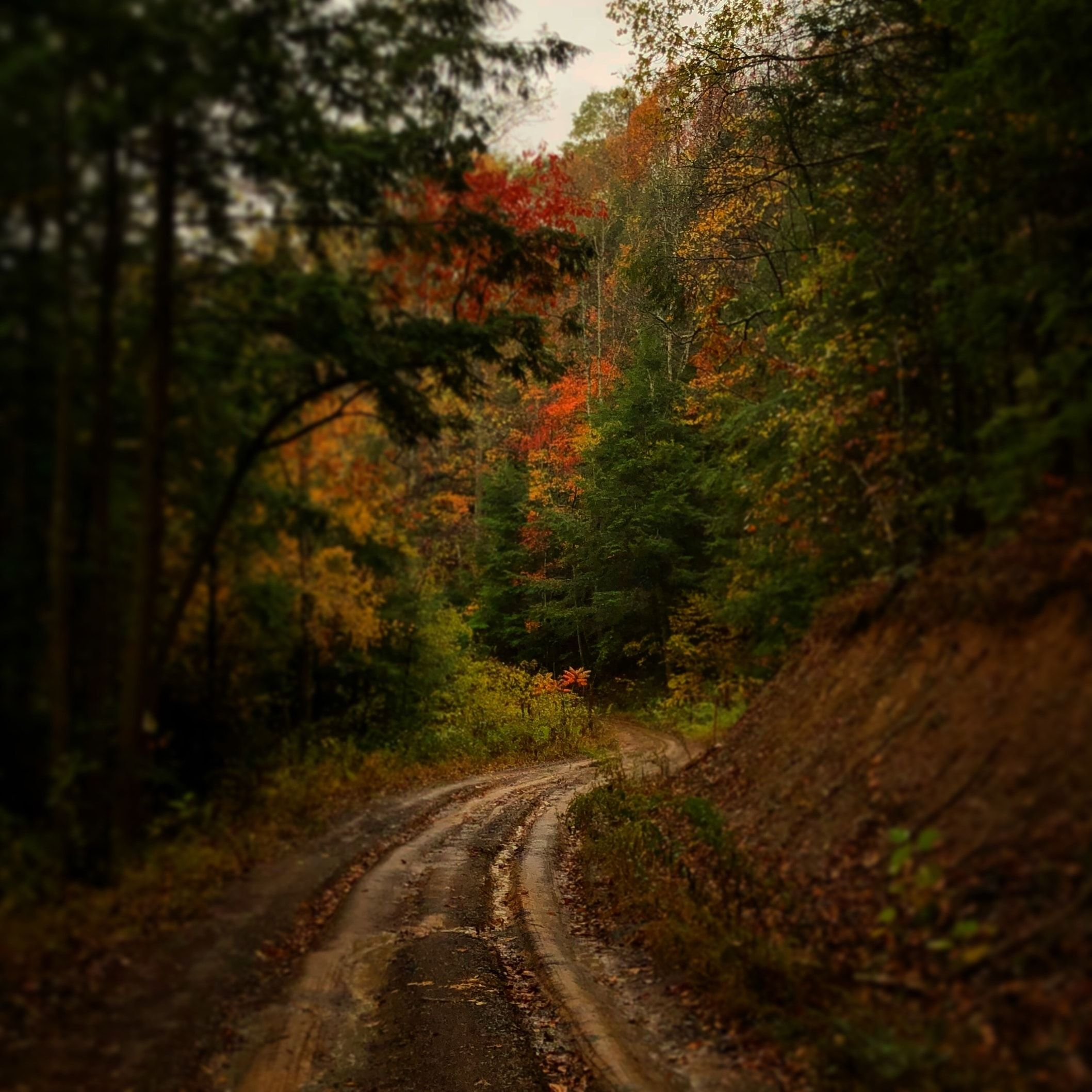 a dirt road in the forest