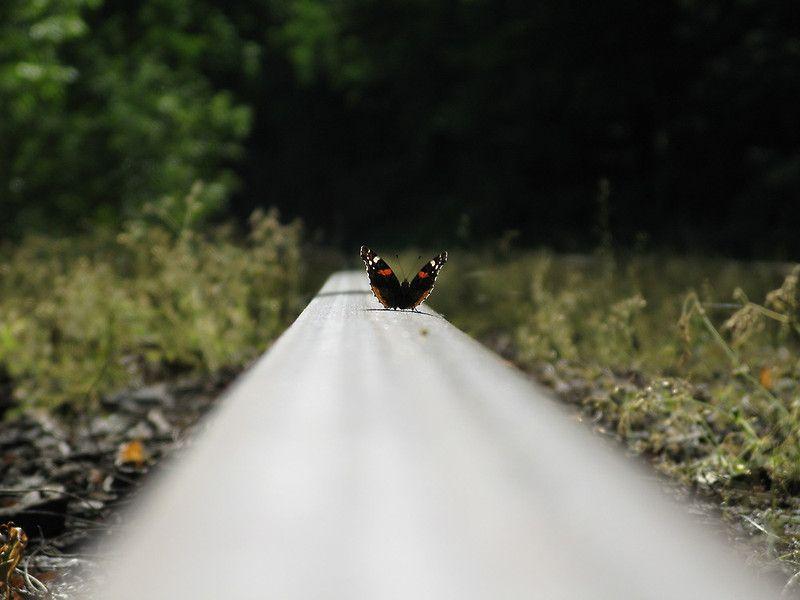 butterfly on rail