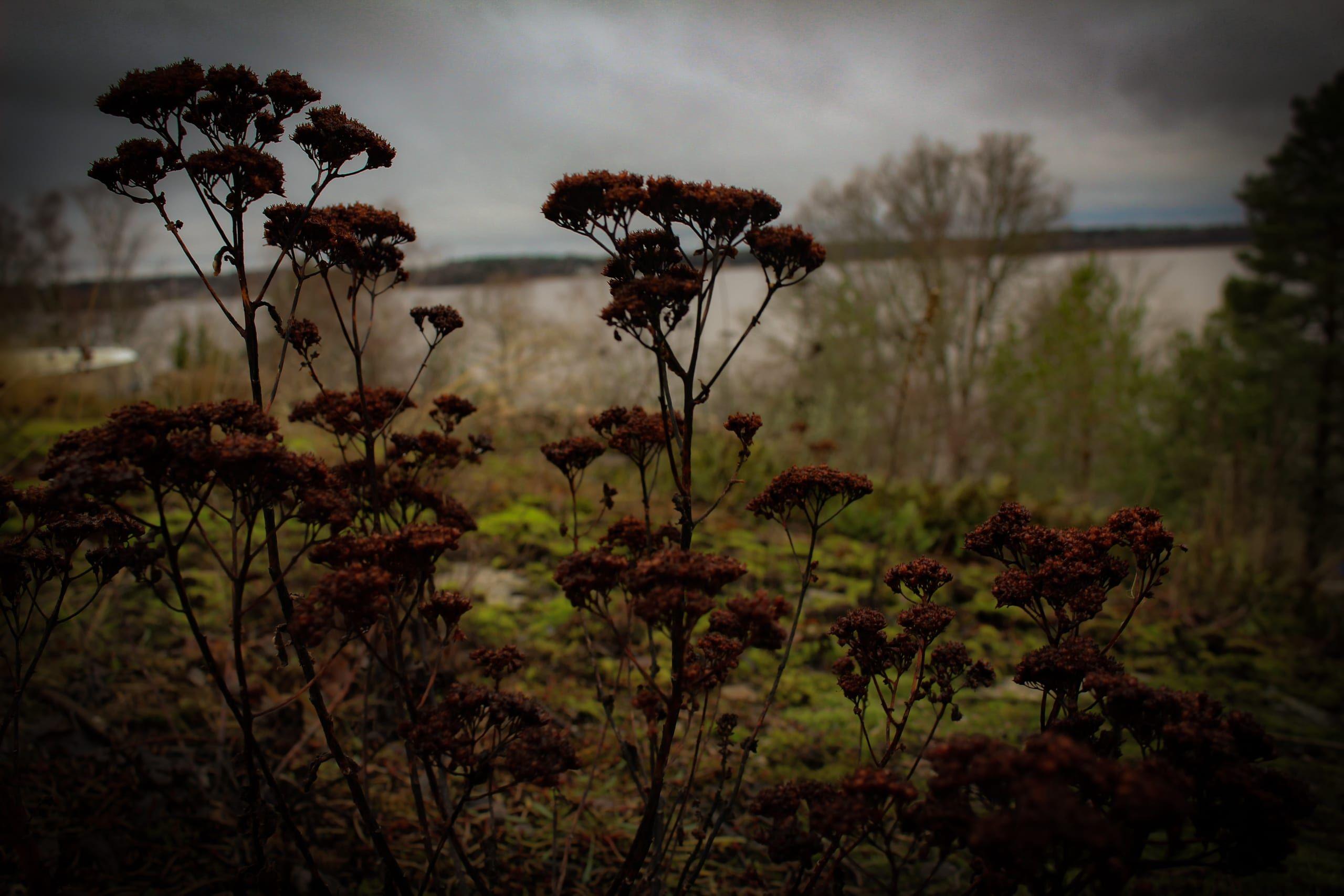late fall flora