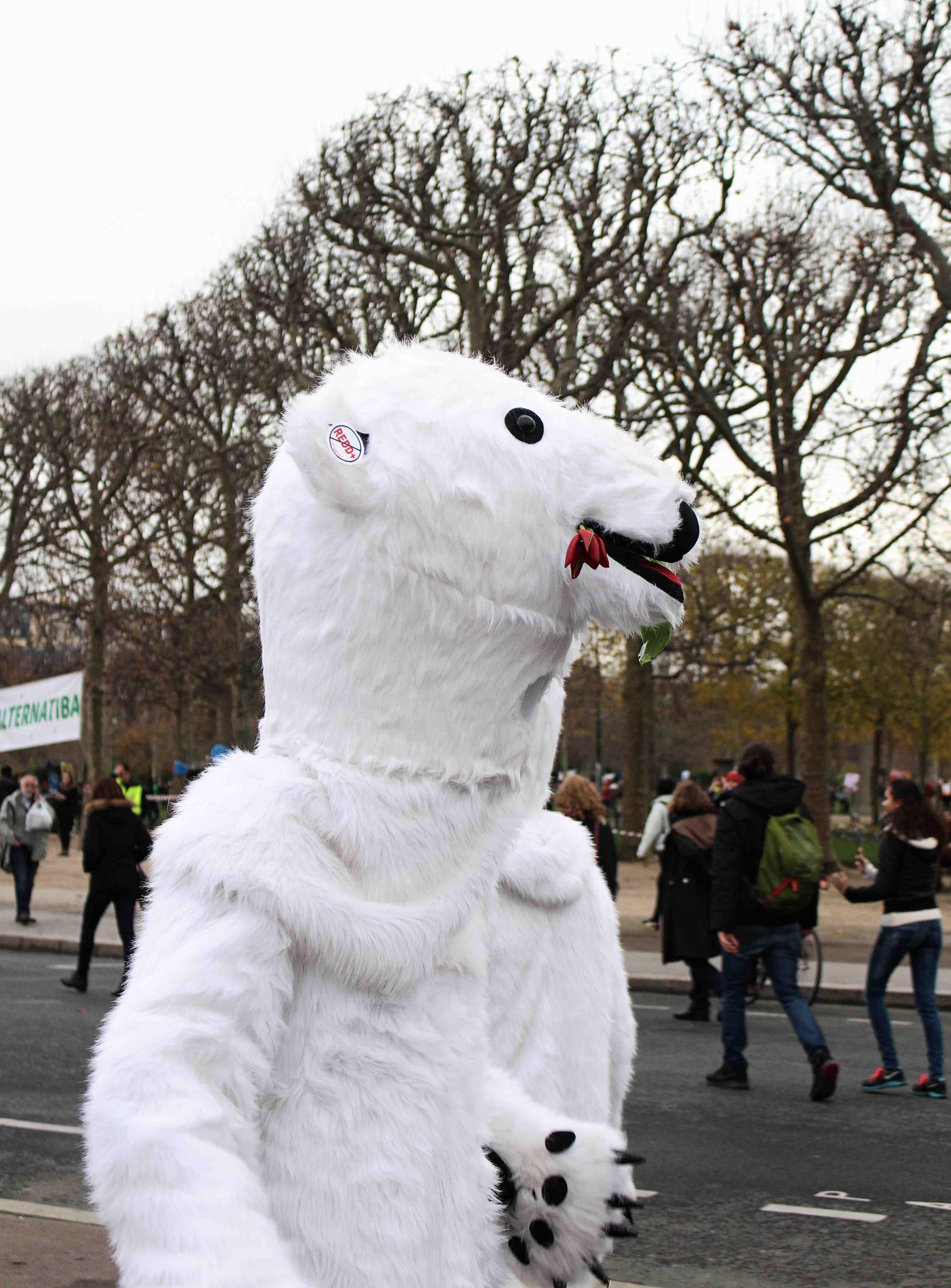 polar bear at protest