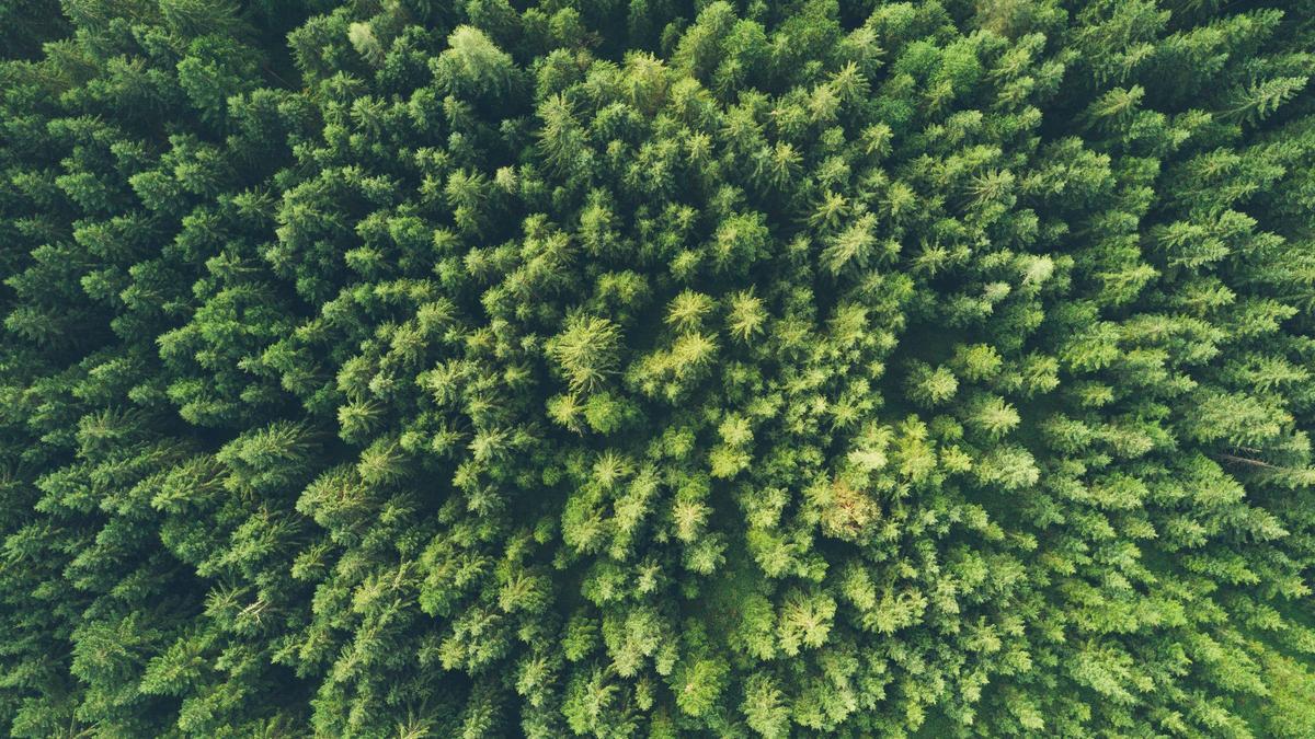 Illustrasjonsbilde av skog tatt av John O'Nolan fra Unsplash