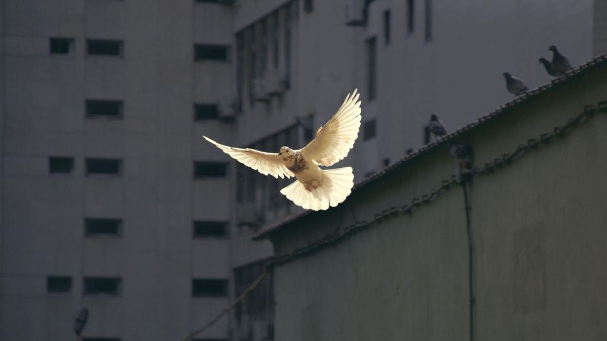 Fugl som flyr i himmelen