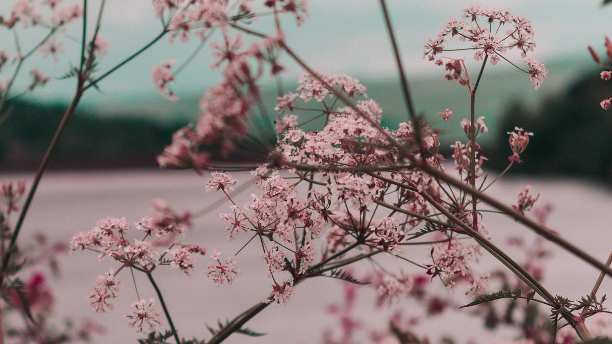 Rosa blomster med natur i bakgrunnen. Illustrasjonsbilde tatt av Ryan Booth fra Unsplash