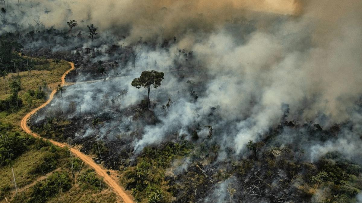 Amazonas brenner