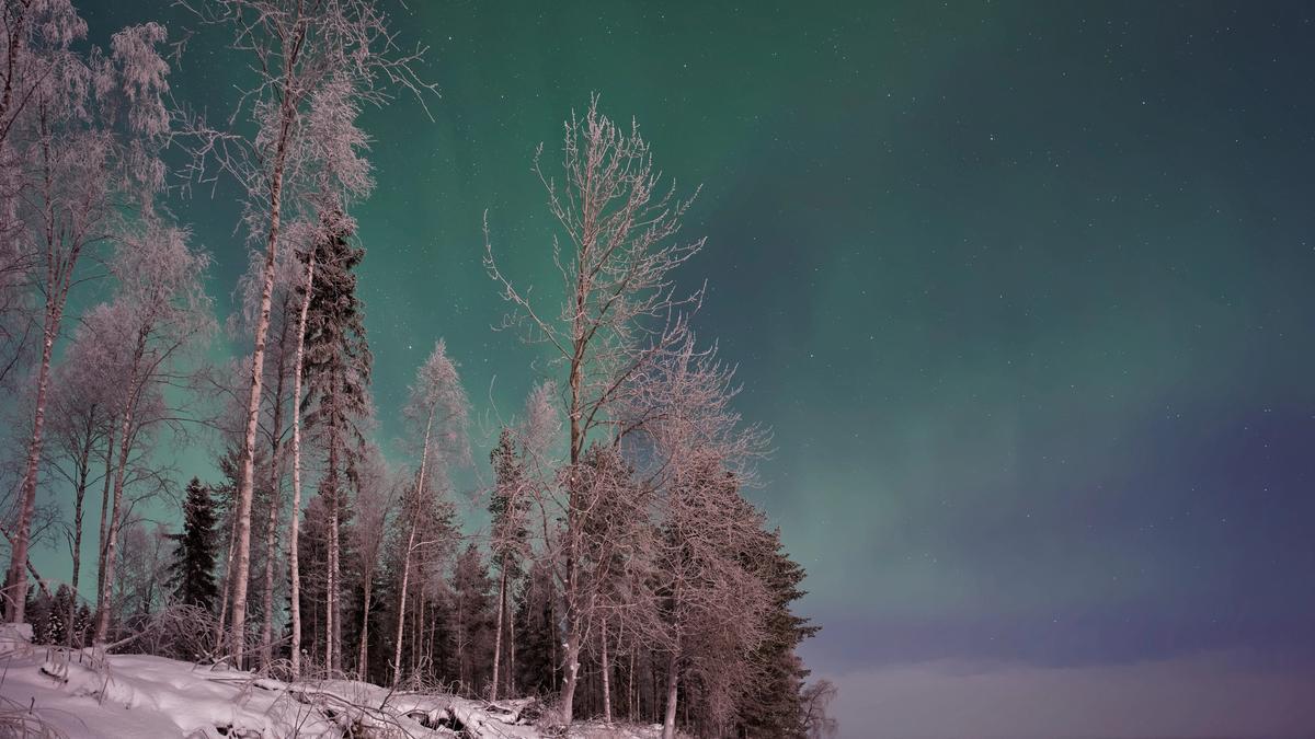 Illustrasjonsbilde av en snødekt skog med nordlys over tatt av Vincent Guth fra Unsplash