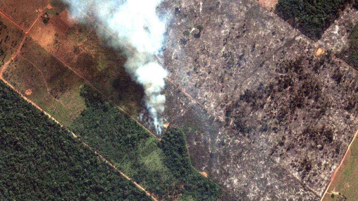 Foto av brennende Amazonas regnskog