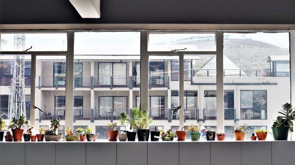 Illustrasjonsbilde av store vinduer som slipper inn mye lys med mange potteplanter i vinduskarmen