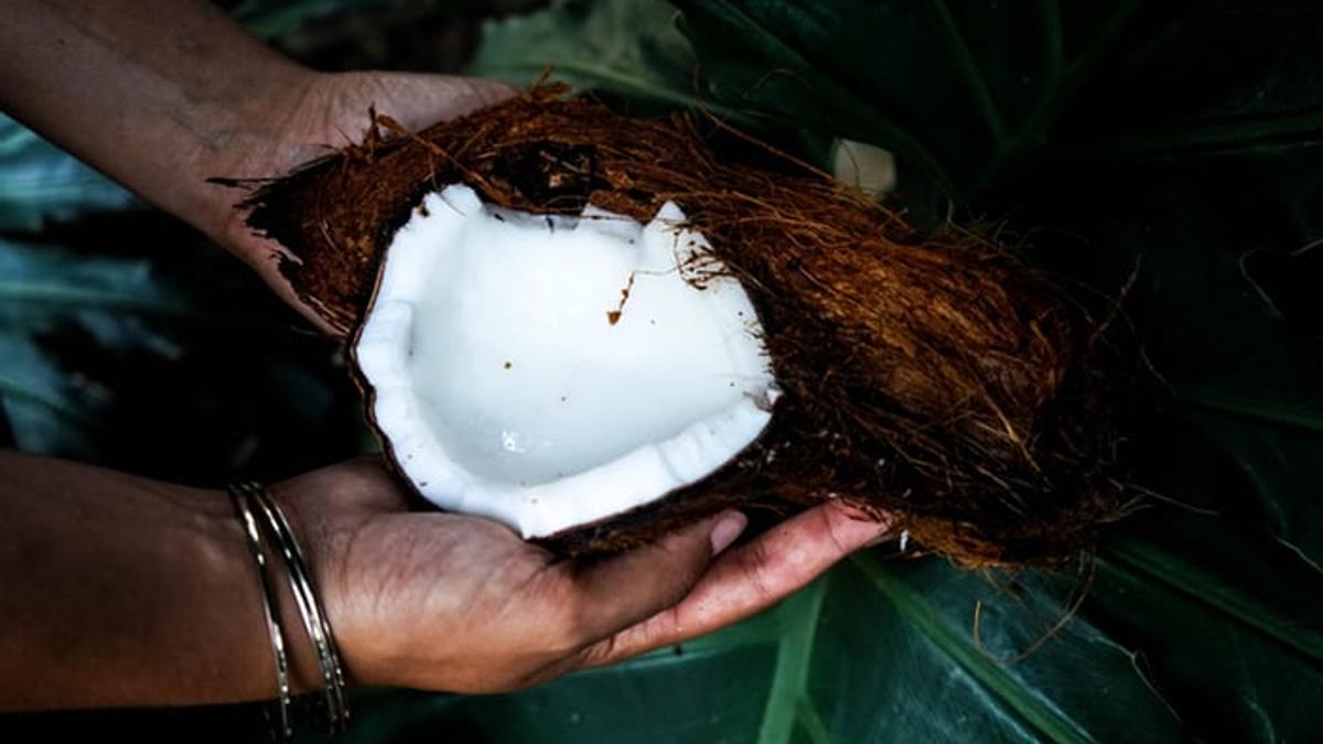 Hender som holder en åpnet kokosnøtt med en bakgrunn av grønne balder