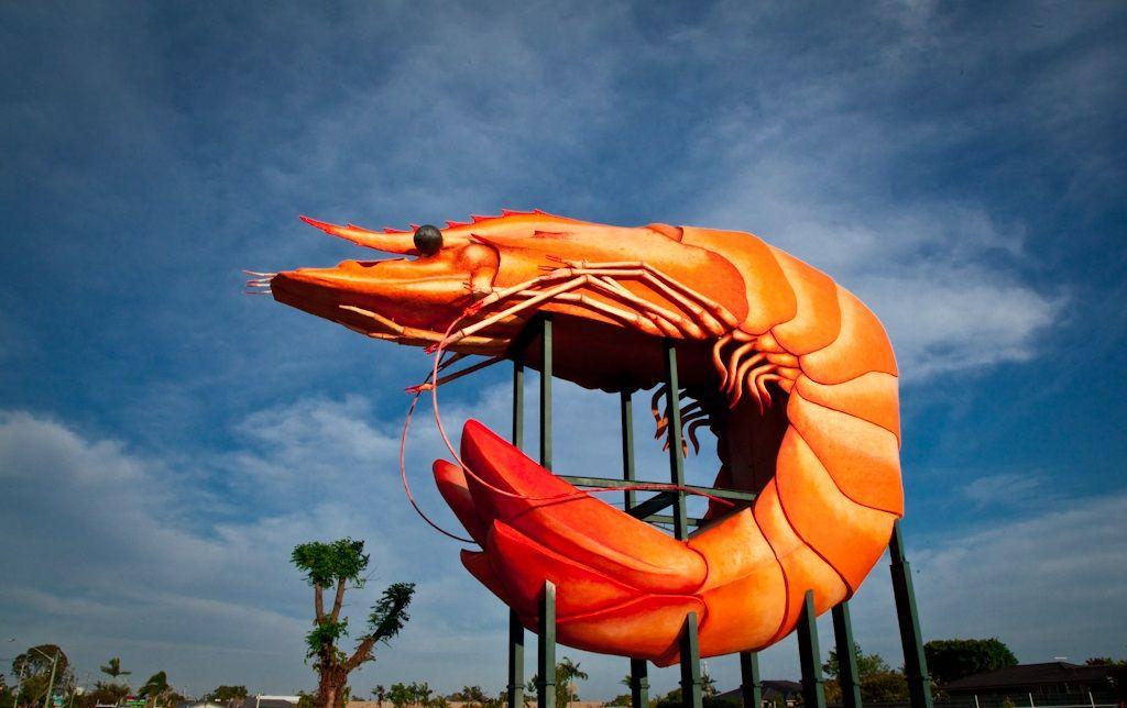 Ballina's giant prawn statue
