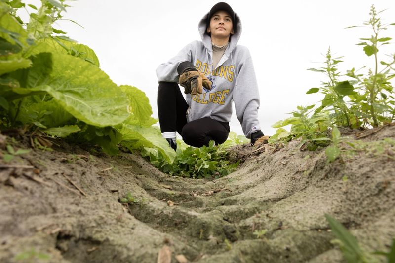 A Rollins student in a crop field.