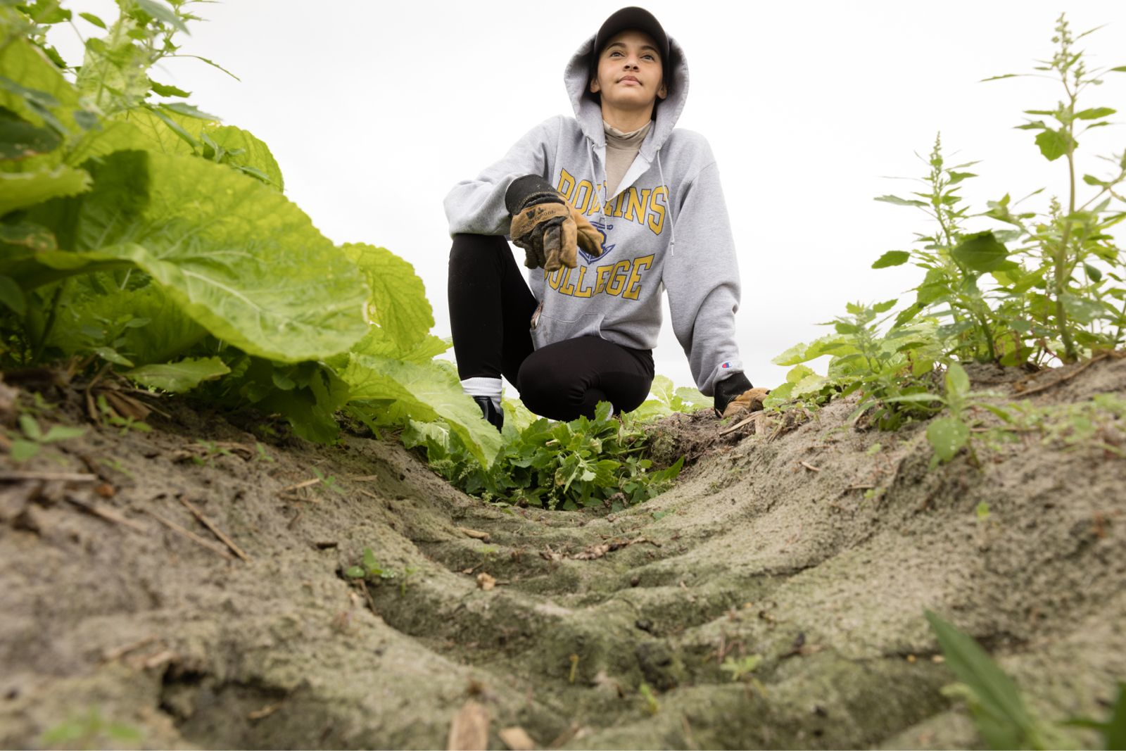 A student pulls weeds from a farm.