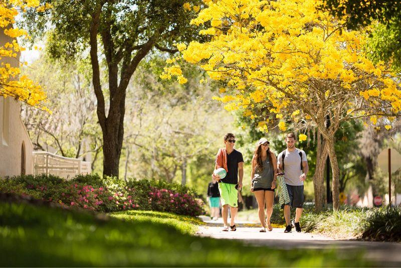 Three students walking through campus under tabebuia trees.