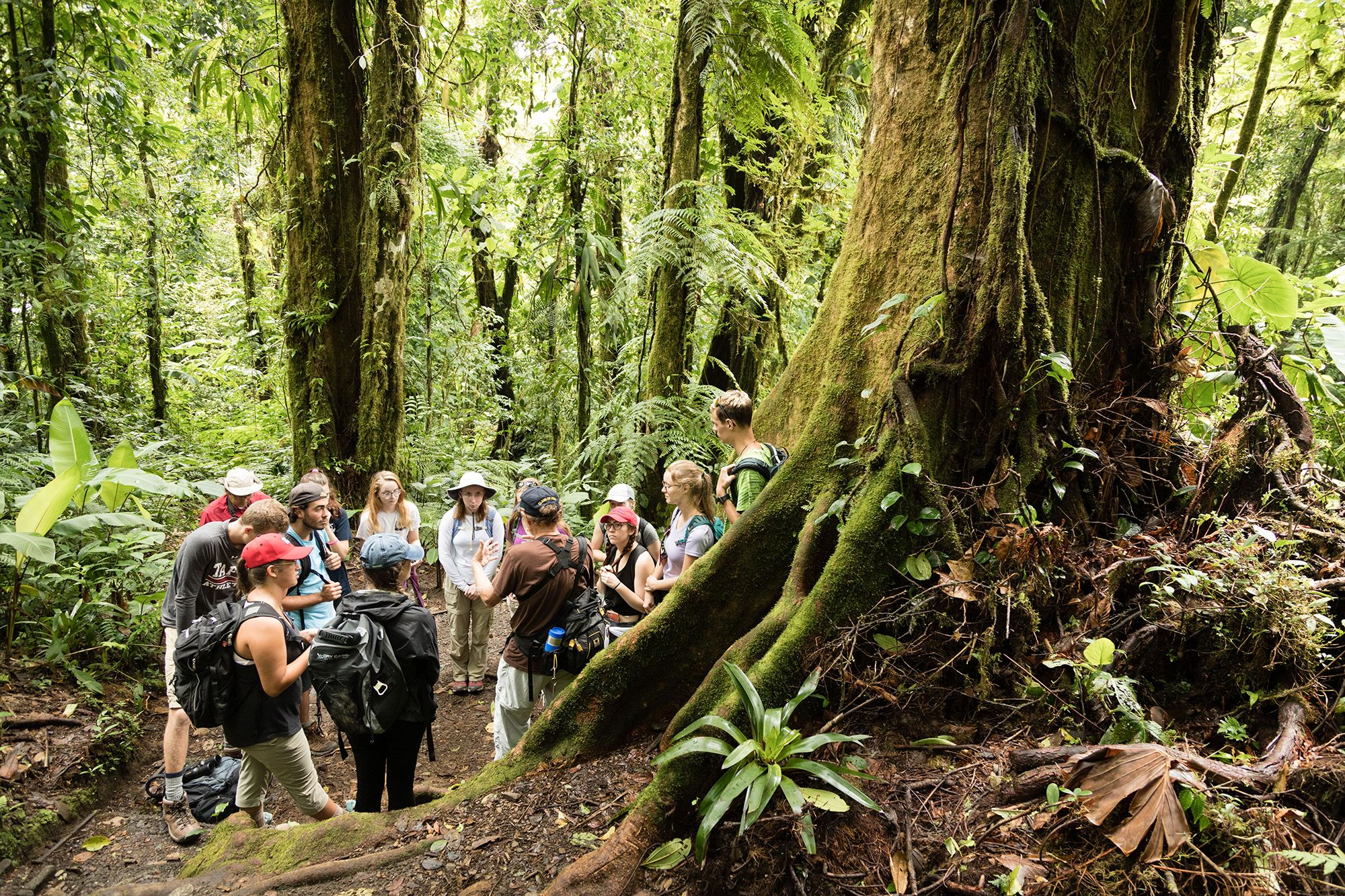 Students have a round-table discussion in a Costa Rican rainforest.