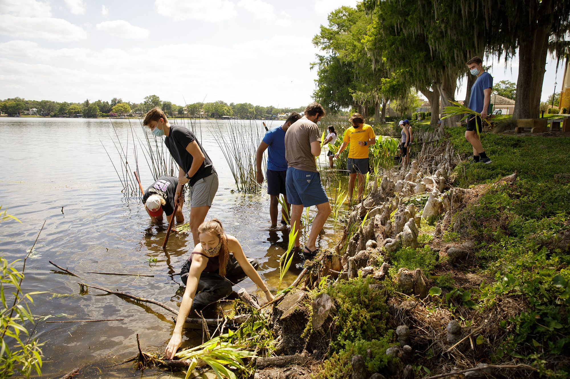 Students restoring the shoreline of Lake Virginia on campus.