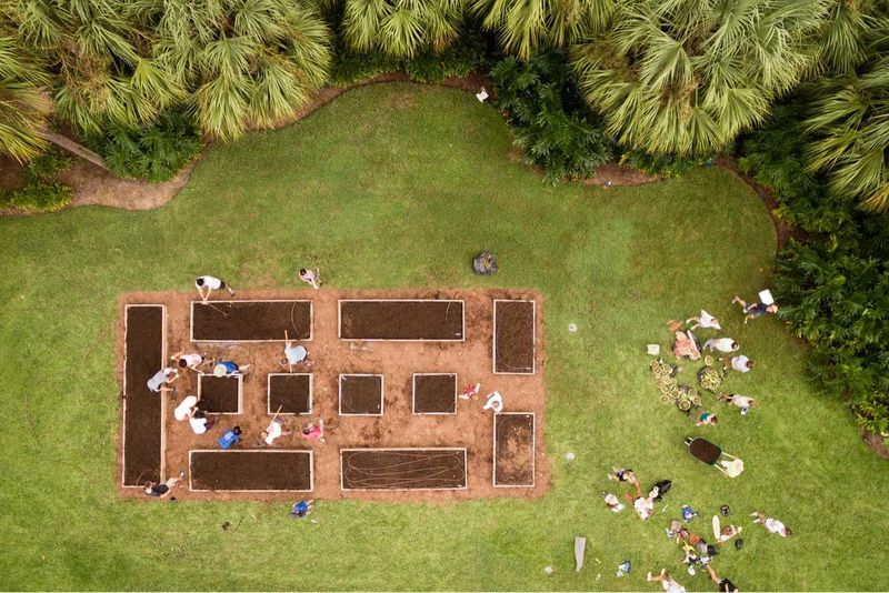 An aerial view of students working in the Elizabeth Hall garden.