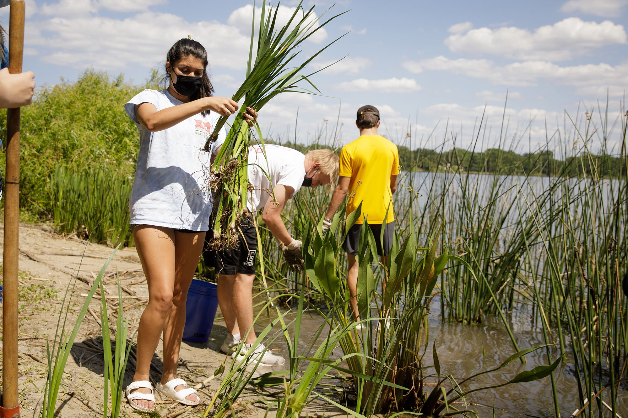 Student carrying a bundle of plants to plant at the Lake Virginia shoreline.