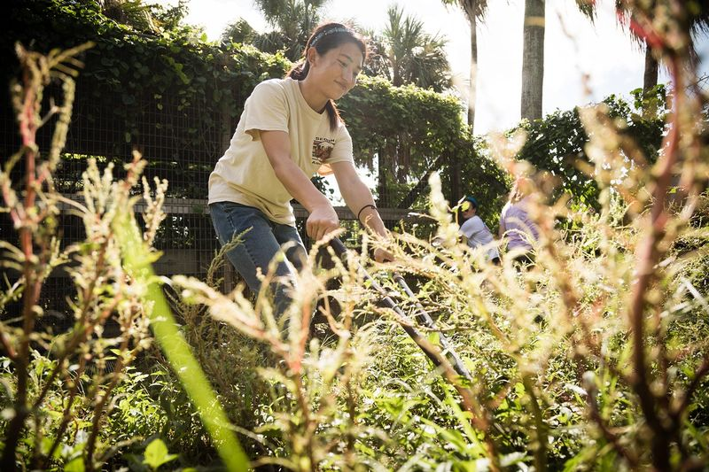 A student helps clear a field at an animal sanctuary in Florida.