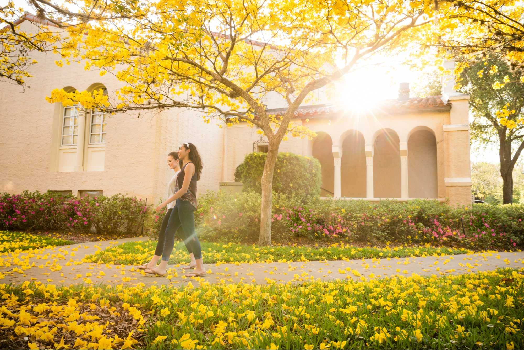 Two students walk down a path strewn with yellow flowers.