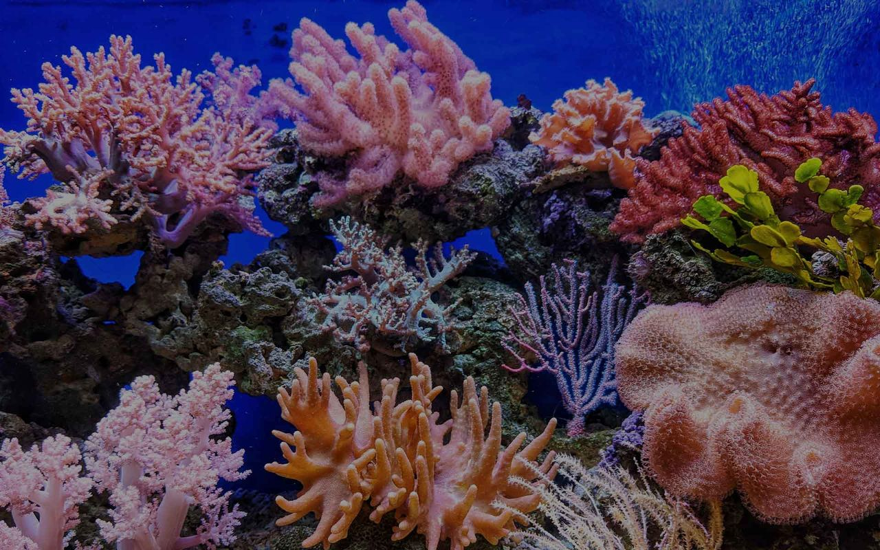 Colorful coral produces its own sunscreen