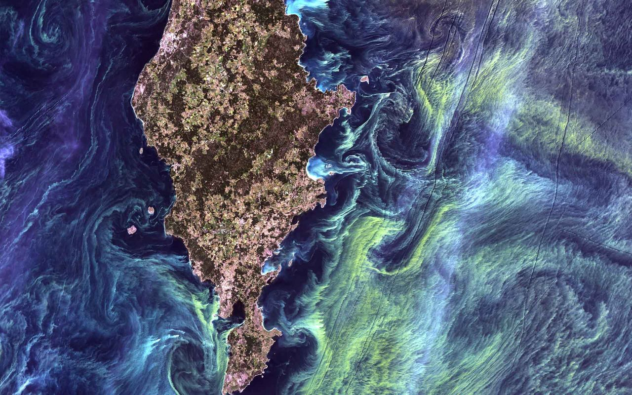 Phytoplankton aerial view in Gotland, Sweden.