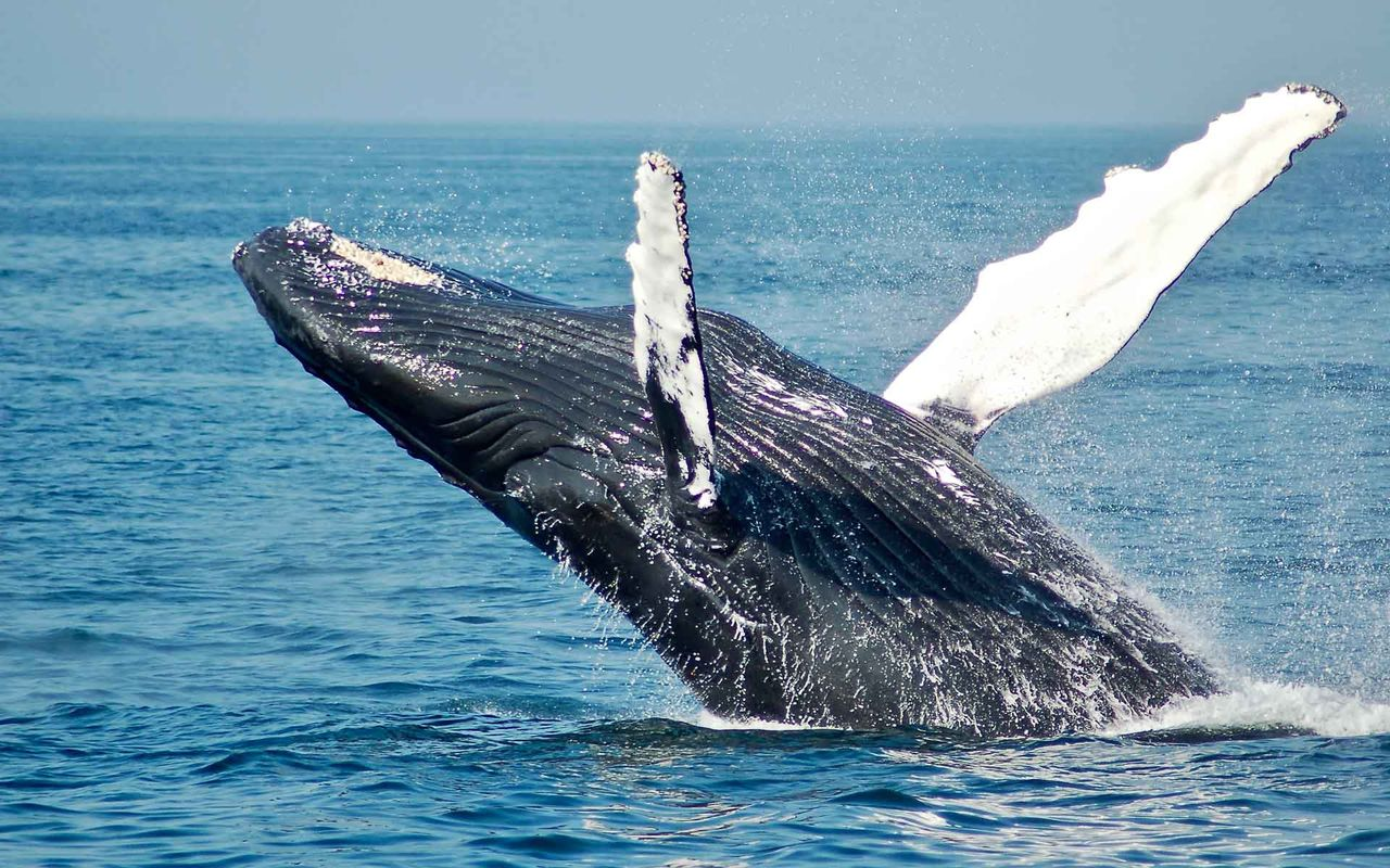 Blue whale over water