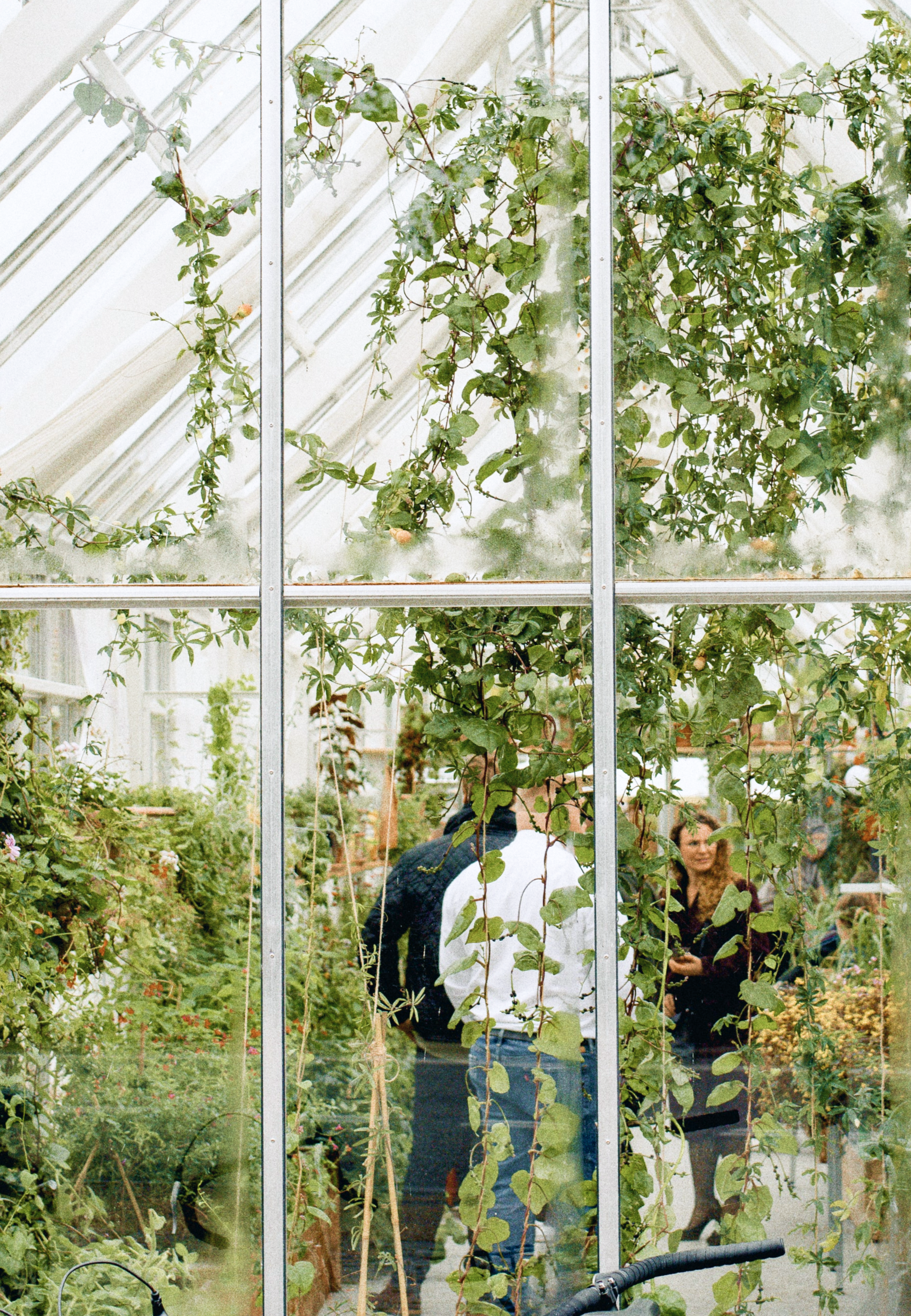 An image taken through a glass wall of a greenhouse of three people talking inside