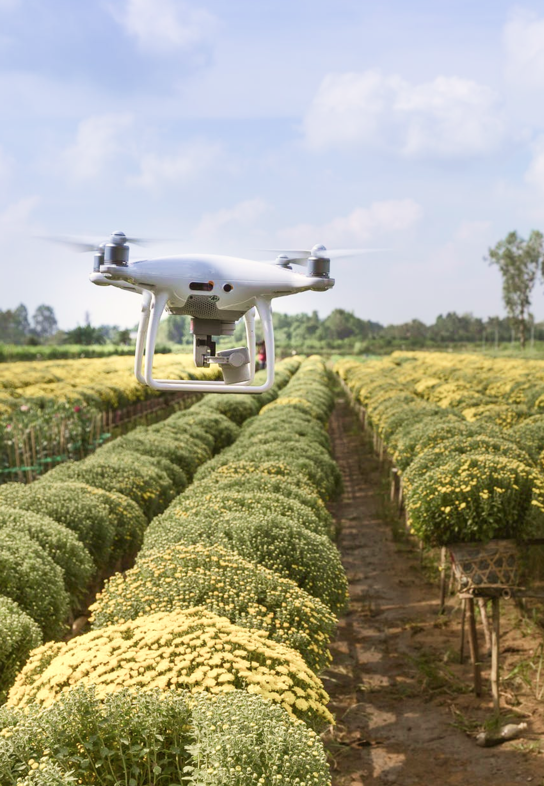 A drone hovering over rows of produce being grown in a field