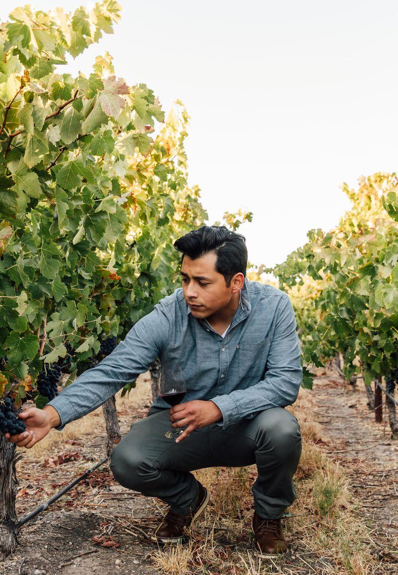 A farmer outside in a vineyard, inspecting fresh fruit growing.