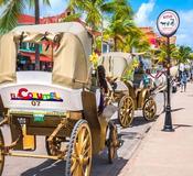 Cozumel Quintana Roo