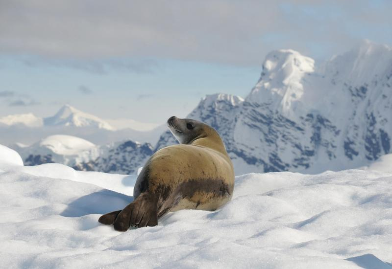 Why not add an Antarctica cruise as well?