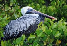 Punta Mangle, Fernandina
