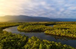Cruise Amazon River