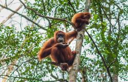 Belawan for Gunung Leuser National Park