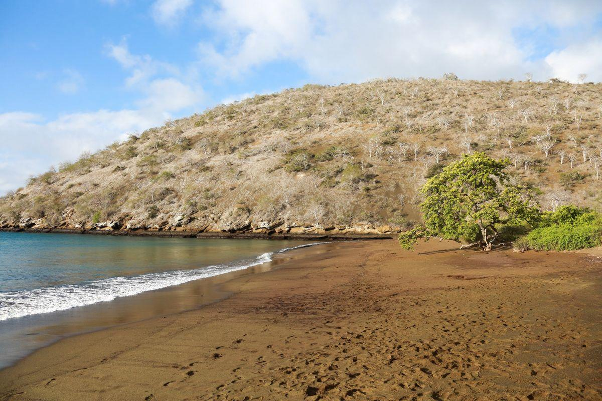Punta Cormorant (Floreana)
