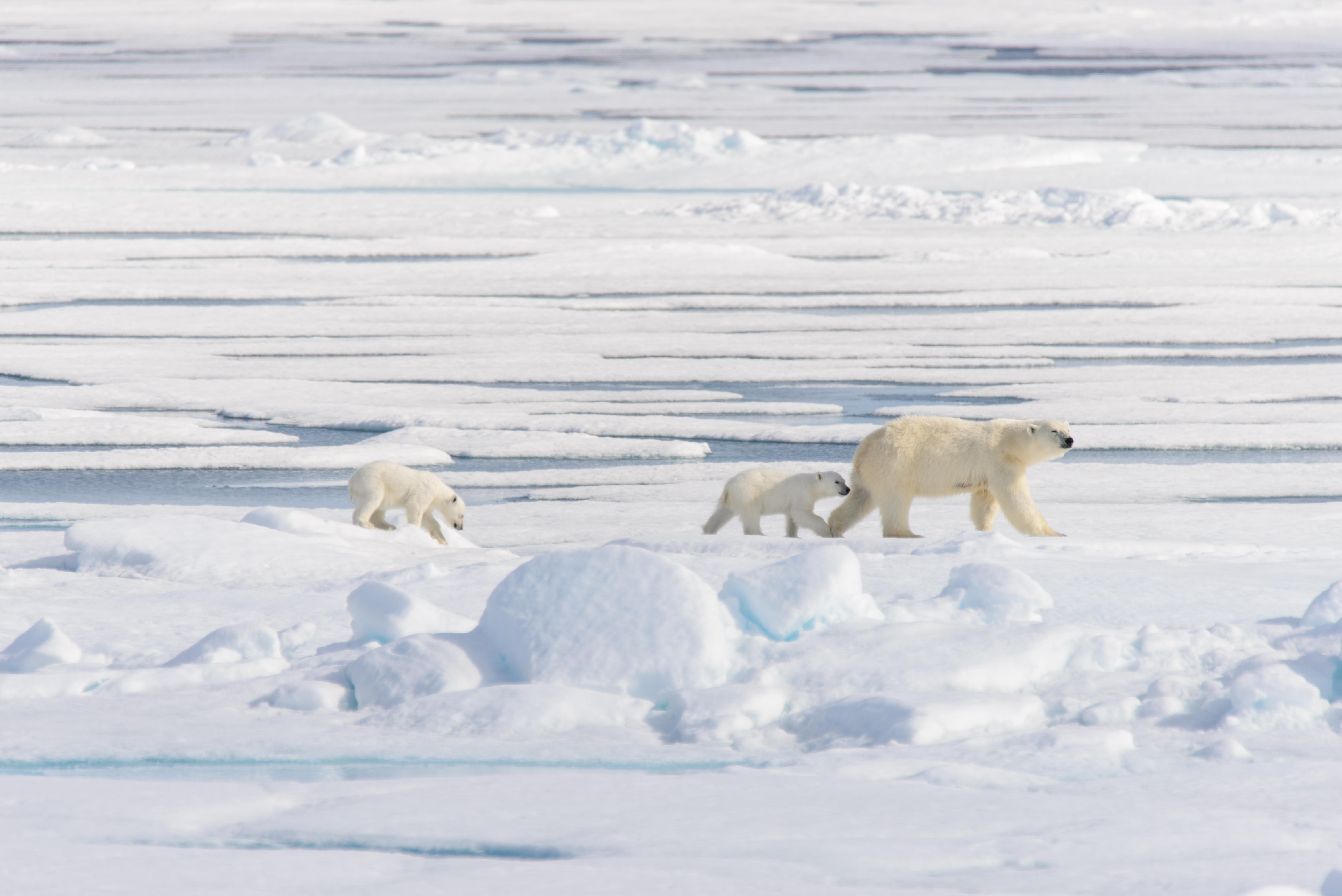 Arktis Und Grönland