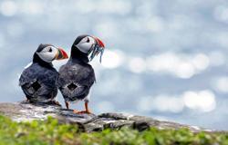 Pierowall, Westray, Orkney Islands