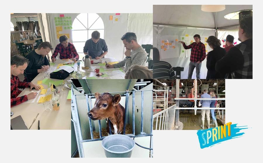 Design Sprint team aan het werk op een boerderij