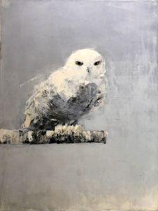 Snowy Owl (Winter)