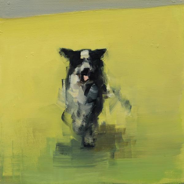 Collie (Running)