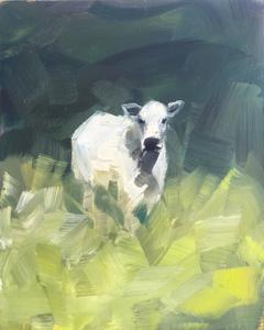 Irish Cow with Shade