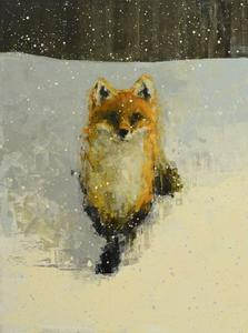 Red Fox with Snow