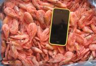 Креветка северных морей 70-90 и 80-100 шт/кг