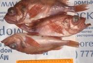 <p>Окунь морской неразделанный с головой, заморожен на промысле. Вес одного окуня от 150г до 300г. Расфасован в пакеты от 1,5 до 4кг. Продаётся на вес расфасованными пакетами и блоками.</p>