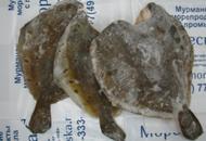 Камбала морская, 0,5-1,5кг