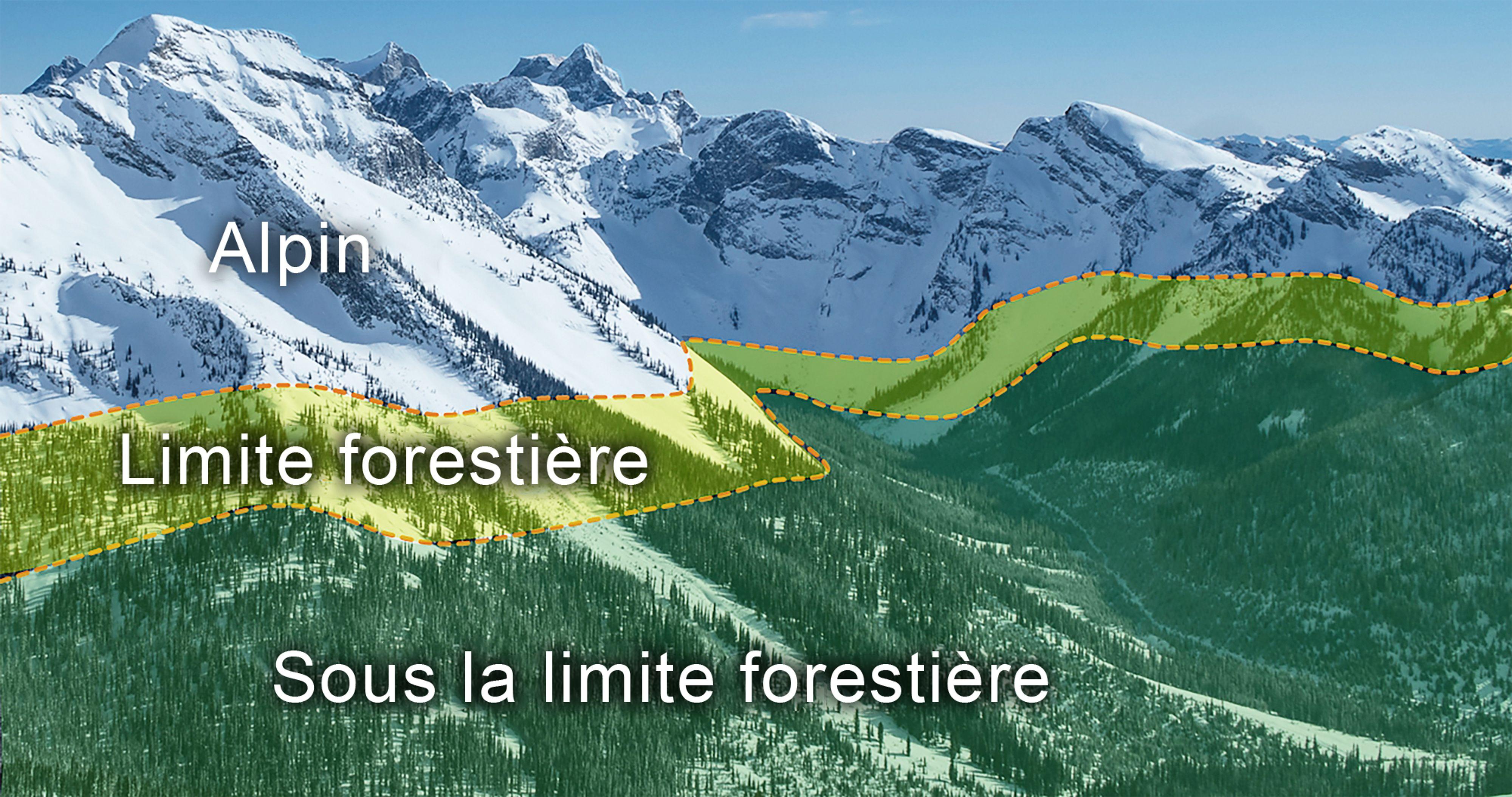 This image shows alpine, treeline, and below treeline elevation bands.