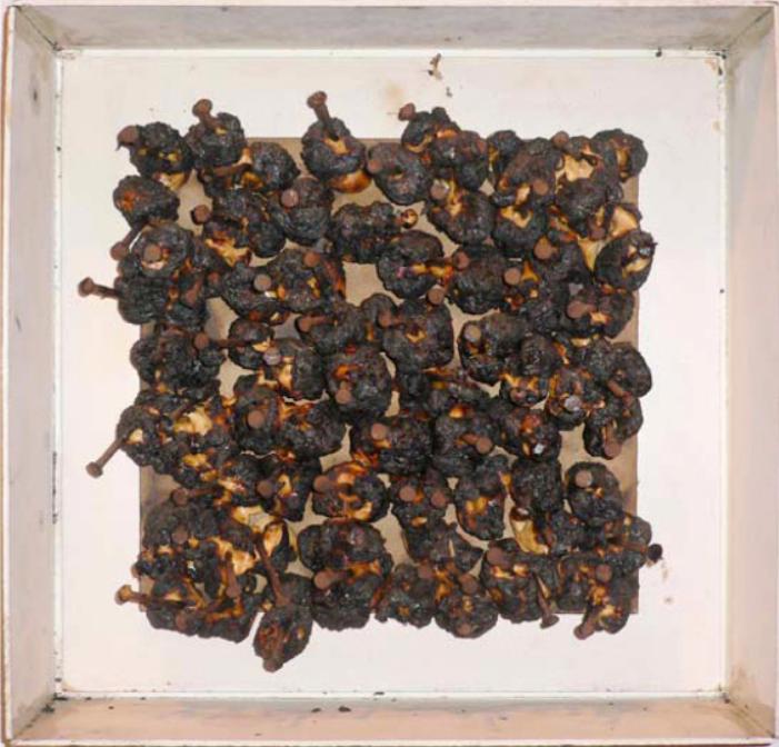 Nailed Marshmellows  Malvaviscos quemados clavados