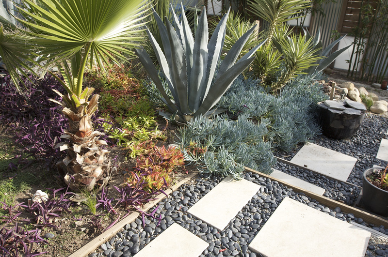 Dought - Planting drought tolerant landscaping