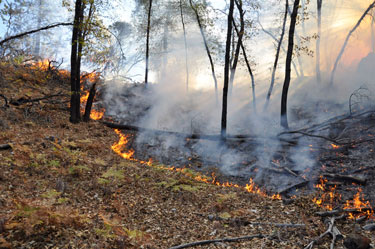 Fire - Wildfire types - Surface