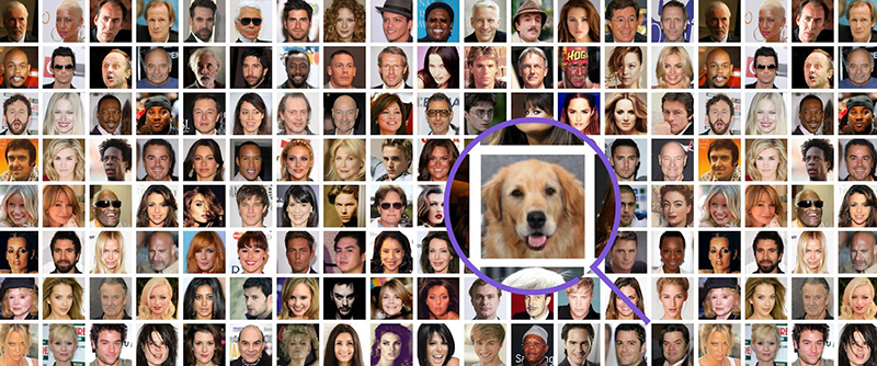 Collage of many pictures of people. One of the pictures stand out bigger: picture of a dog with a circle around it.
