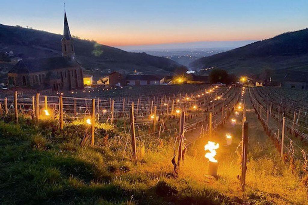 Vakker, men illevarslende utsikt hos Domaine Merlin i La-Roche Vineuse sør i Bourgogne. Foto: Paul Merlin